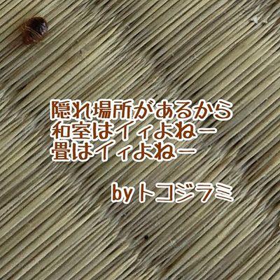トコジラミ 南京虫 ネッタイトコジラミ 血糞 抜け殻 卵 トコジラミ駆除 南京虫駆除 ネッタイトコジラミ駆除